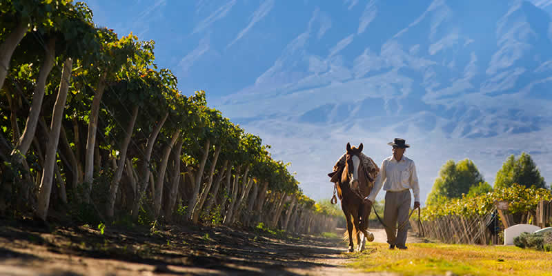 Cafayate: wine, nature and pleasure