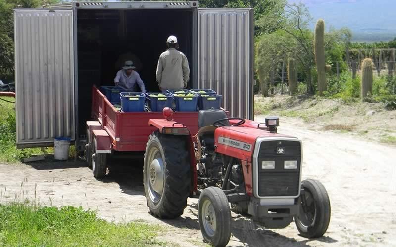 Burbujas de Altura • Proceso: Cosecha y entrega de uva en winería